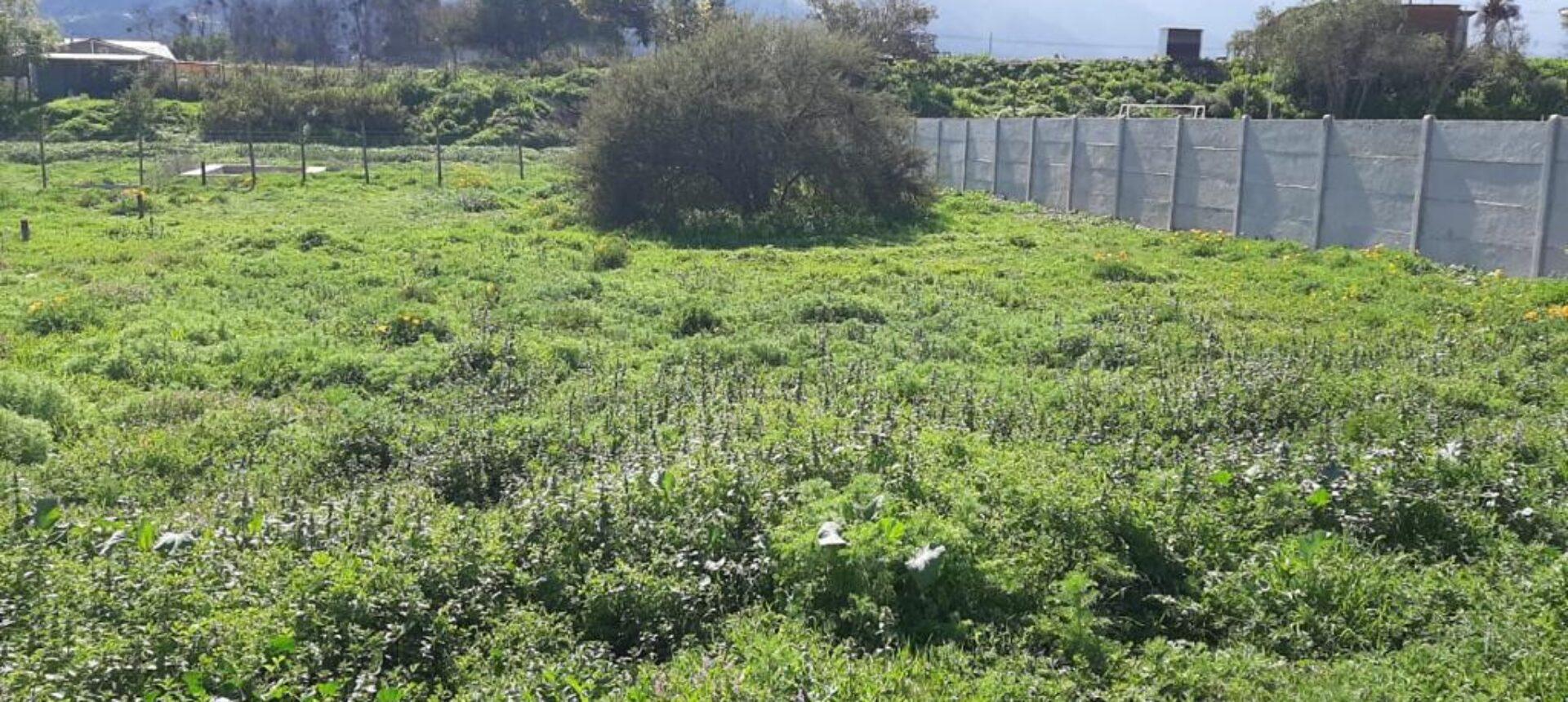Lindo terreno de 1.000 m² Olmué
